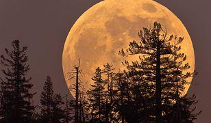 """""""Krwawy Księżyc"""" pojawi się na niebie o 21.30"""