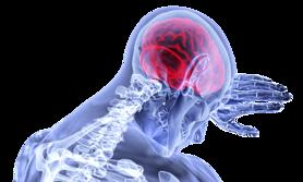 Nerw błędny – budowa, przebieg, funkcje i uszkodzenie