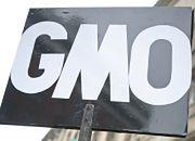 CBOS: dwie trzecie ankietowanych za zakazem uprawy roślin GMO
