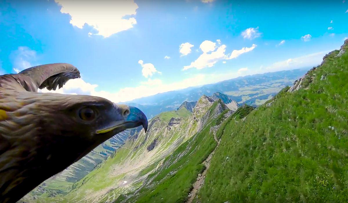 Lot orła nad Alpami. To wideo zmienia perspektywę!
