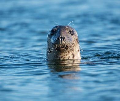 Co foka ma do powiedzenia na temat globalnego ocieplenia?