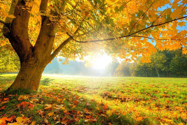 Astronomiczna jesień rozpocznie się 23 września
