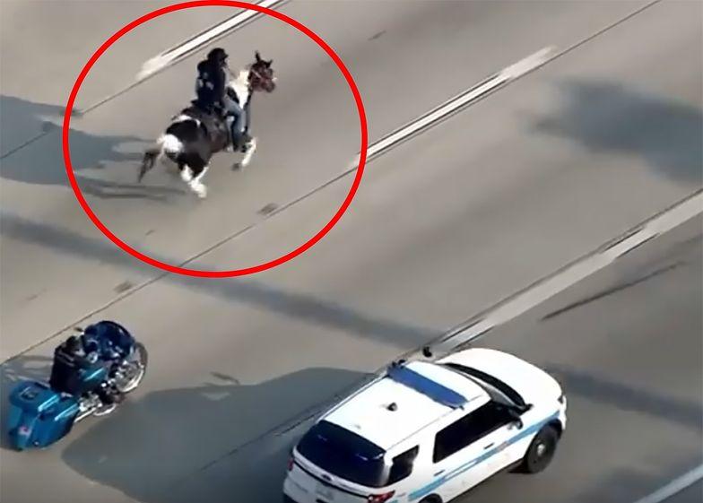 Jechał konno po autostradzie. Chciał zwrócić uwagę na ważny problem
