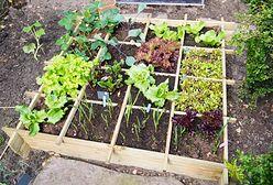 Domowy warzywnik krok po kroku. Uprawa warzyw w ogrodzie