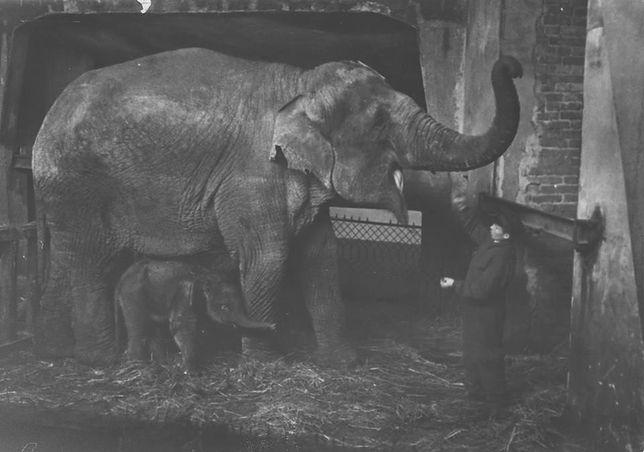 Warszawski ogród zoologiczny świętuje 88 lat
