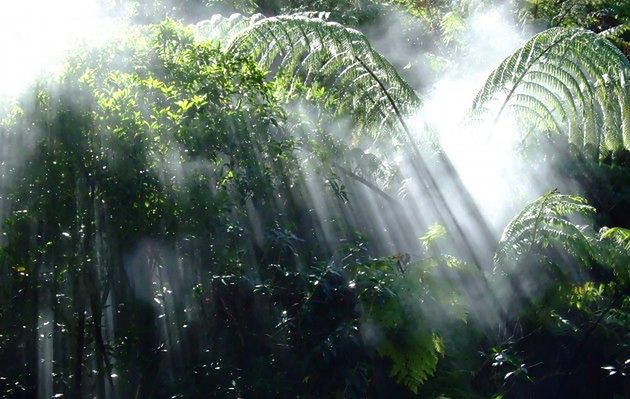 Najpiękniejsze lasy deszczowe świata