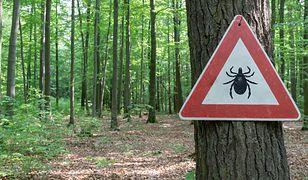 Kleszcze 2019: Naukowcy ostrzegają przed plagą. Sprawdź, jak należy chronić się przed kleszczami i jakie są objawy boreliozy