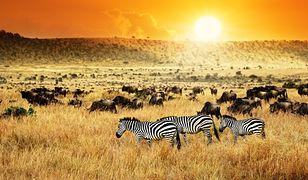 Kenia - kraj, w którym możemy wypocząć na plaży, a na safari zobaczymy nosorożce, lwy i zebry