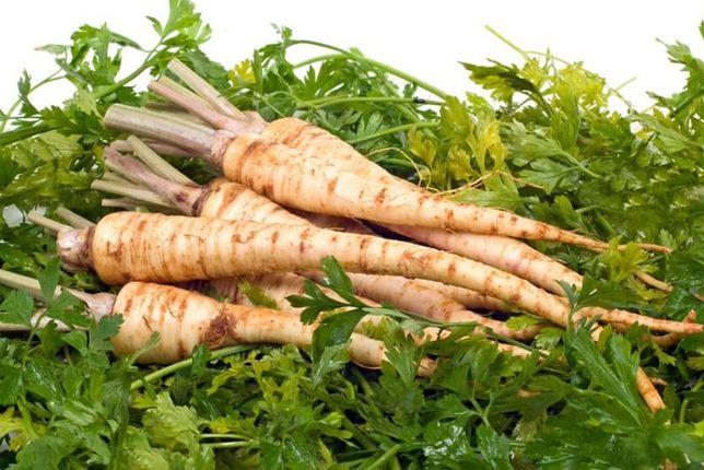 Korzeń pietruszki – charakterystyka, właściwości, zastosowanie w kuchni