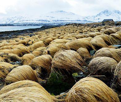 Tromsø – odkryliśmy sekretne miejsce, gdzie Donald Trump… hoduje swoje włosy