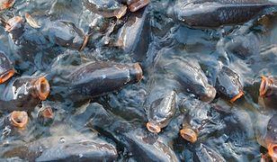 Kupujesz żywe karpie? Sąd Najwyższy wydał wyrok ws. transportu i przetrzymywania ryb