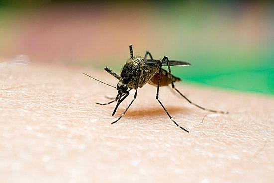 To może być przełom w walce z komarami