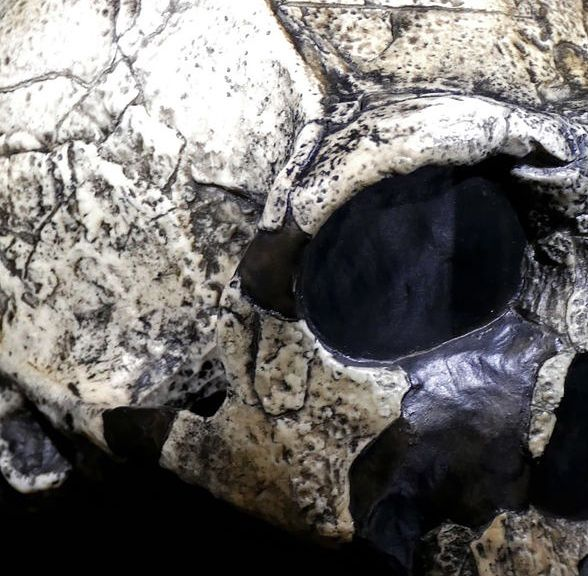 Bułgaria. Homo sapiens mieszkał obok Neandertalczyka. Przełomowe odkrycie naukowców