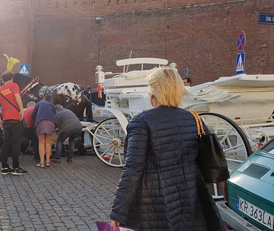 Koń upadł w środę popołudniu pod Wawelem