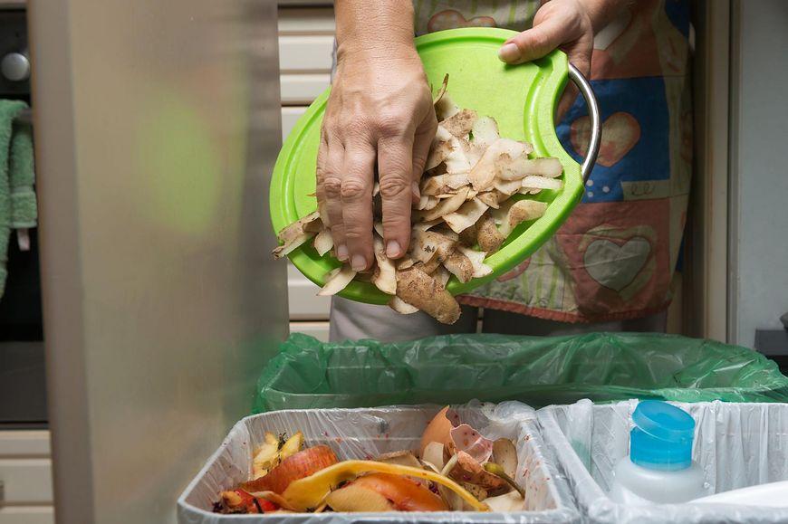 Nieregularne wyrzucanie śmieci sprawia, że muszki owocówki przenoszą groźne dla naszego zdrowia bakterie i wirusy