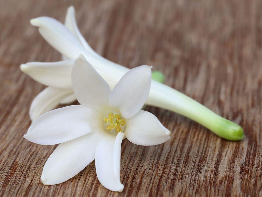 Kwiat tuberozy [123rf]