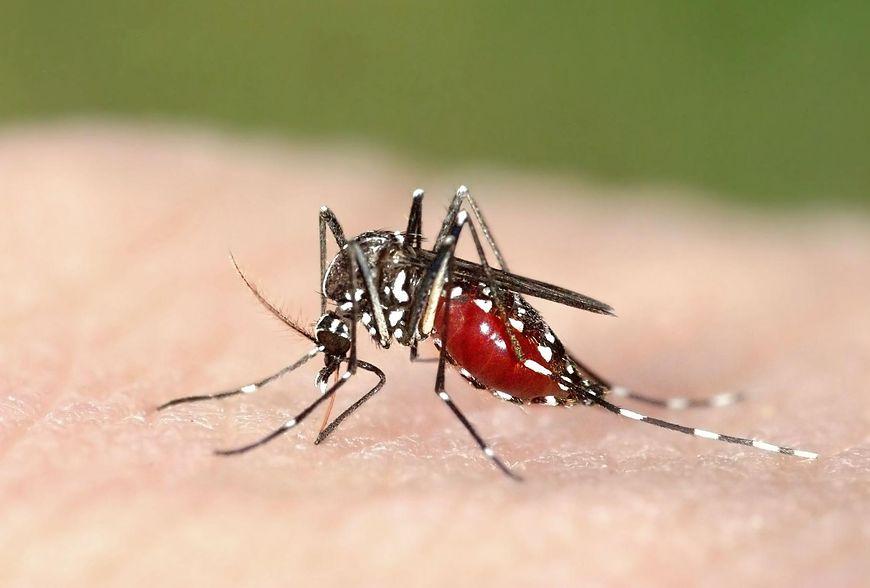 Naturalne sposoby na odstraszenie komarów