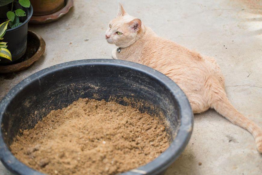 Kot przy miednicy z piaskiem