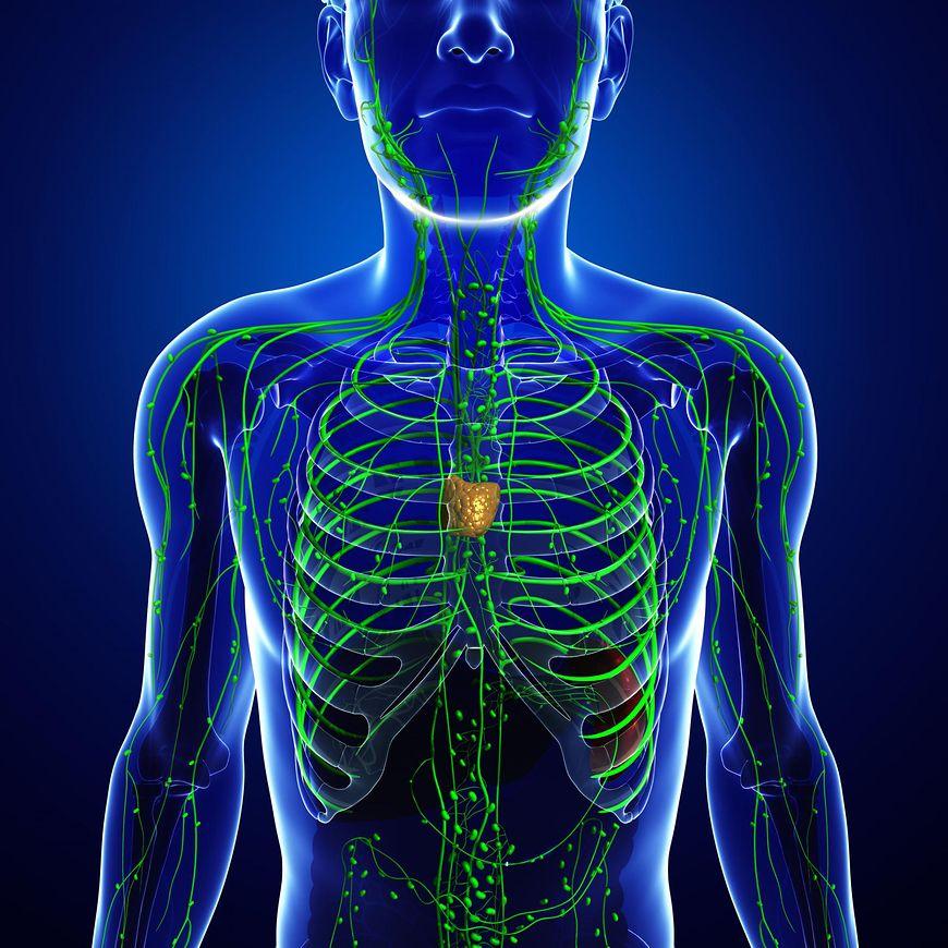 Układ limfatyczny - co to jest?