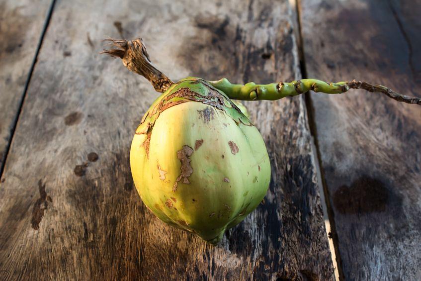Młody kokos jest źródłem antyoksydantów
