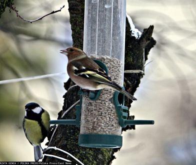 W jaki sposób mądrze dokarmiać ptaki?