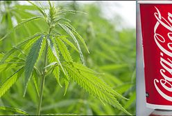 Coca-Cola chce stworzyć napój z marihuaną
