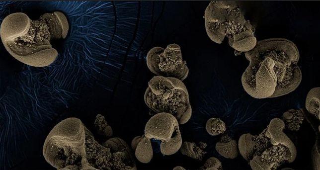 Bakterie zjadające metale