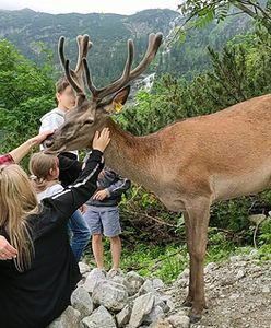 """Władze TPN apelują: """"nie dokarmiajcie dzikich zwierząt"""""""