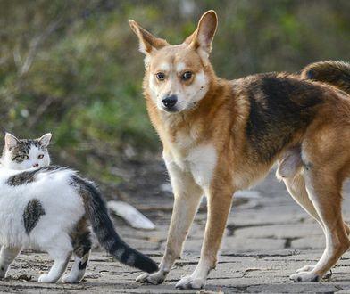 Warszawa. Ruszają bezpłatne zabiegi dla zwierząt