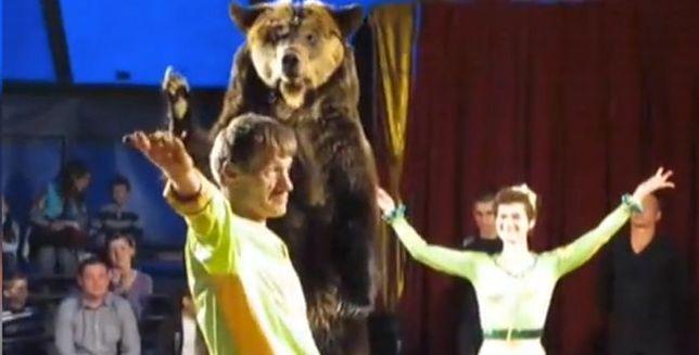 O włos od tragedii. Niedźwiedź wbiegł w publiczność w cyrku