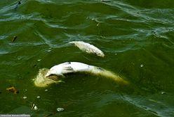 W Zatoce Puckiej wypłynęły martwe ryby. Mieszkańcy donoszą, że widać je przy samym falochronie