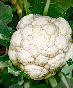 Liście kalafiora to składnik wielu dań kuchni międzynarodowej. Nigdy ich nie wyrzucaj