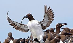 Holandia: Nagła śmierć 20 tysięcy ptaków. Okoliczności wymarcia trudne do wyjaśnienia