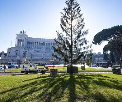 """Bożonarodzeniowa choinka w Rzymie nazwana """"łysym drapakiem"""""""