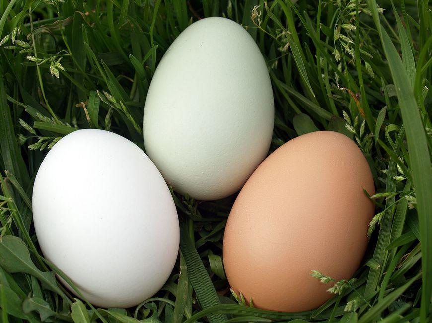 Jajka w diecie