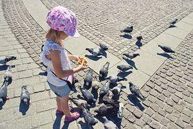 Choroby przenoszone przez gołębie