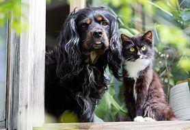 Ekstremalne objawy przedmiesiączkowe? Winny może być twój kot