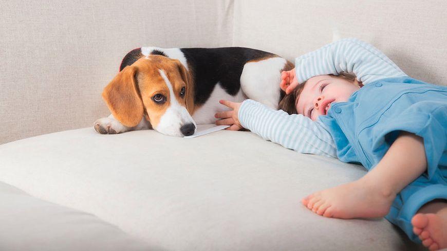 Dzieci, które mają psy, są spokojniejsze