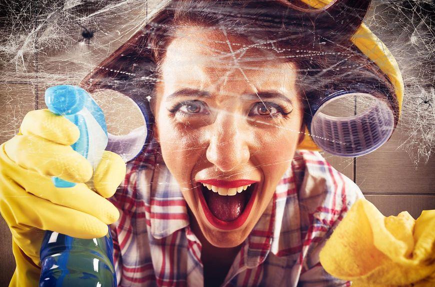 walka z pająkami [123rf.com]