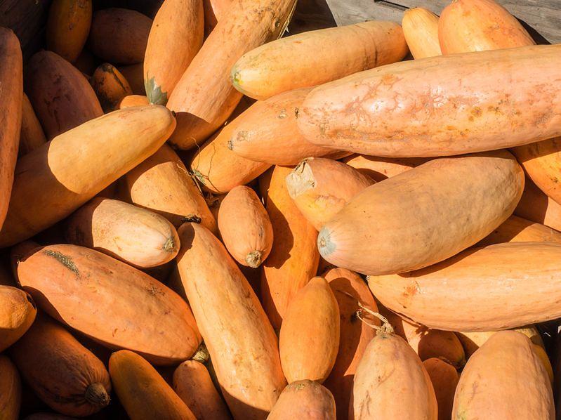 Dynia makaronowa z roku na rok staje się coraz popularniejsza