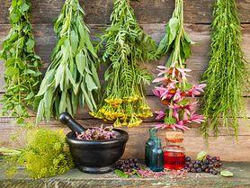 Przekonaj się, jakie zioła stosować na wątrobę i woreczek żółciowy