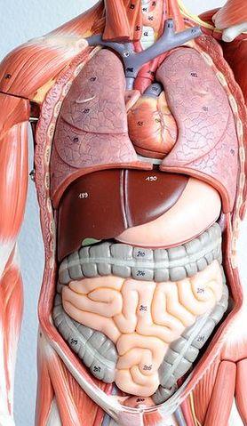 Poznaj 5 prostych sposobów na zregenerowanie wątroby