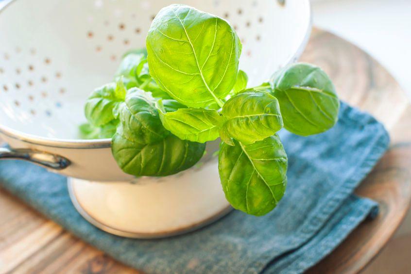 Herbata bazyliowa ma pozytywny wpływ na zdrowie
