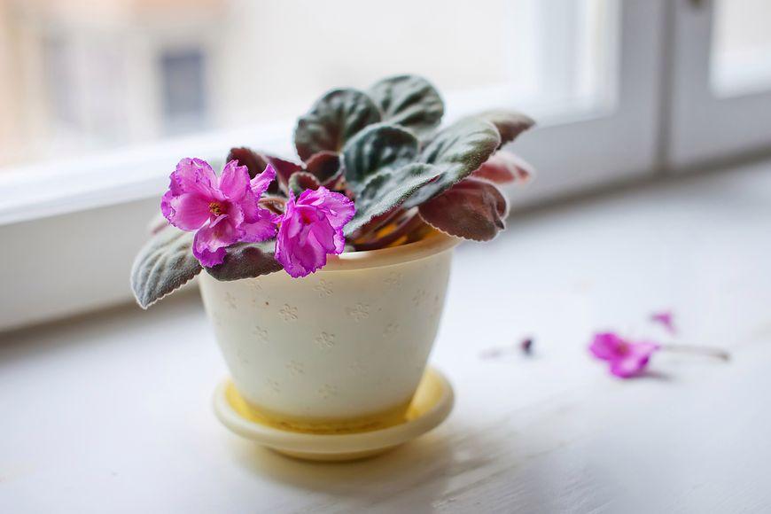Rośliny lubią odpowiednią wilgotność i dostęp do światła