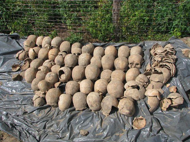 Budowali drogę, trafili na dawny cmentarz. Znaleziono szczątki tysięcy osób