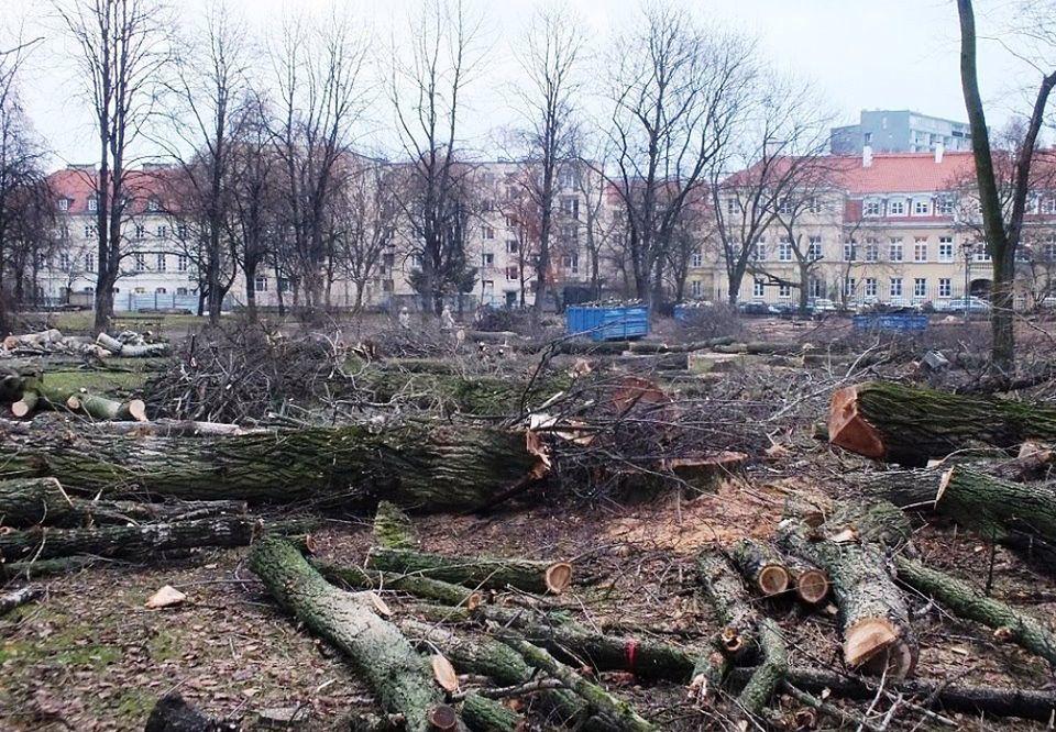 Sprzeciw wobec masakry drzew w Ogrodzie Krasińskich