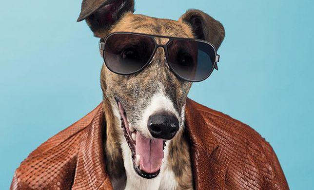 William Wegman - z miłości do psów