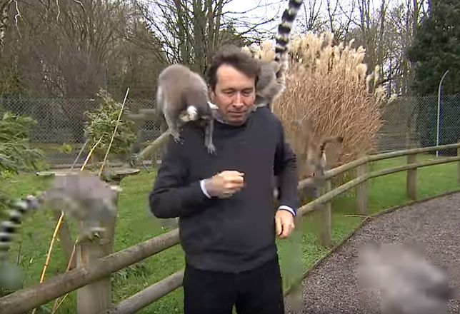 """Dziennikarz nie miał żadnych szans. """"Gang lemurów"""" robił z nim, co chciał"""