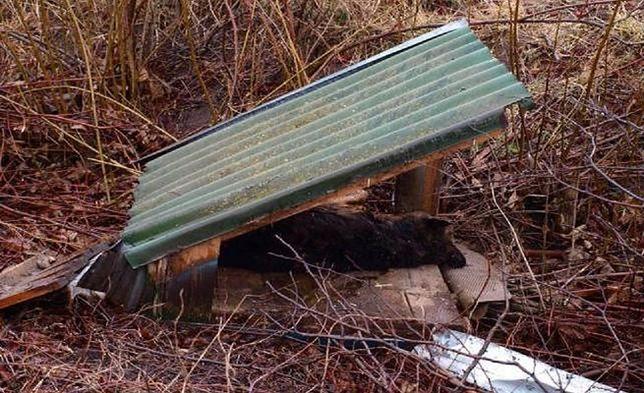 Pies na co dzień trzymany był na łańcuchu.