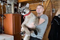 Puma. Weteran z Afganistanu grozi dyrektorce zoo